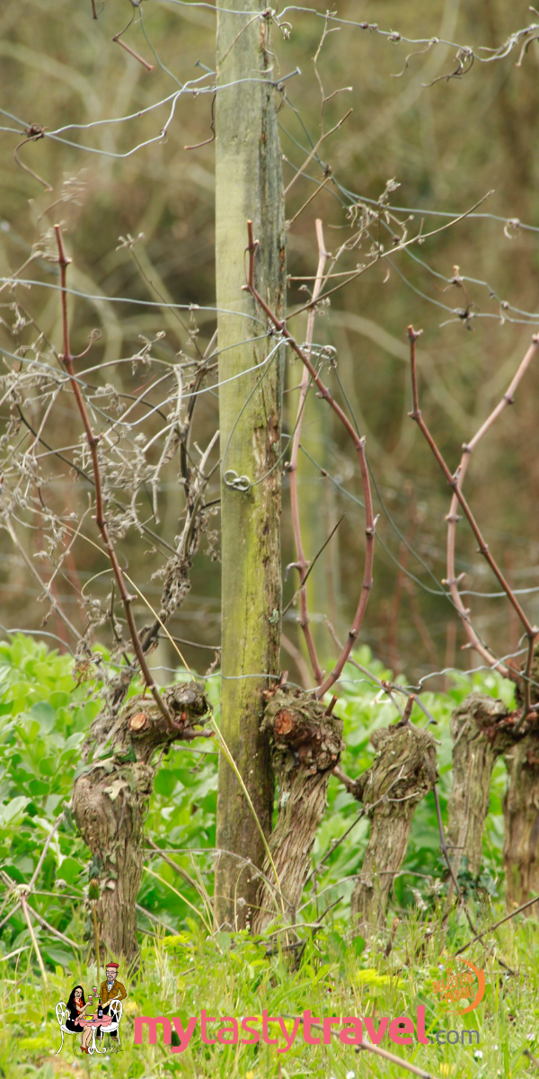 Domaine Capmartin, le vigne bio en mars 2019