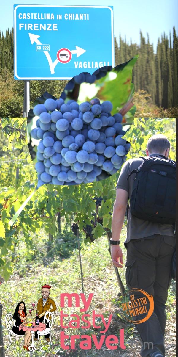 Vignoble Florence Italie Chianti