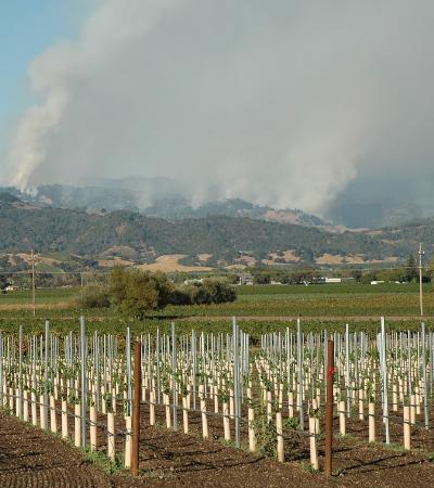 l'industrie du vin et le changement climatique
